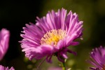 Blüte 5